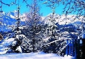 PINE_Inverno